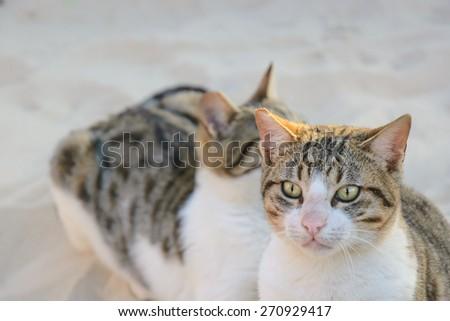 Portrait of Stray cat, sunny summer day - stock photo