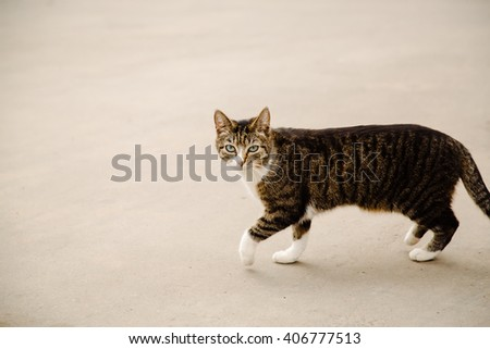 Portrait of stray walking multicolor cat - stock photo