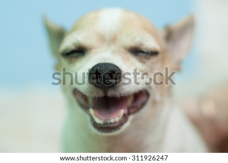 portrait of the dog - stock photo