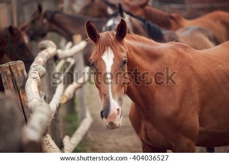 Portrait of the horse on a rural background, summer time - stock photo
