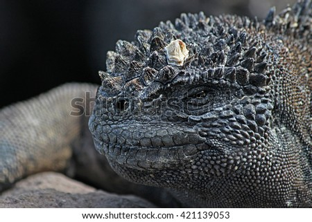 Portrait of the old black reptiles closeup - stock photo