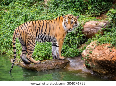 Portrait of the tiger - stock photo