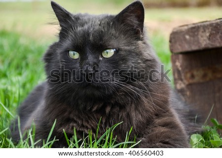 tomcat stock photos images  pictures  shutterstock