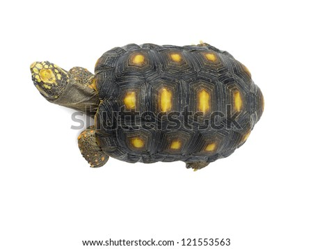 Portrait of turtle isolated in a white background - stock photo