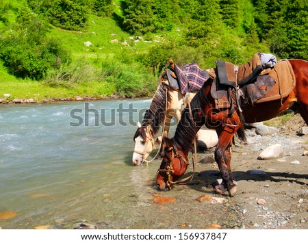 Portrait of two beautiful domestic horses (white and chestnut) drinking water from high mountain river between green fields and soft wood in Tien Shan range, Kyrgyzstan, Central Asia  - stock photo