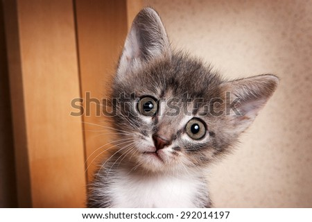 Portrait of unhappy kitten with big eyes looking at the camera - stock photo