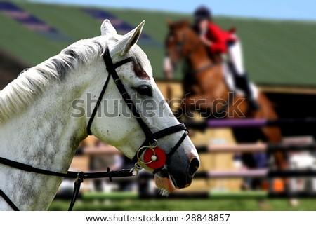 portrait of white horse - stock photo
