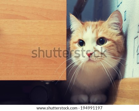 Portrait of yellow scared cat hiding at home - stock photo