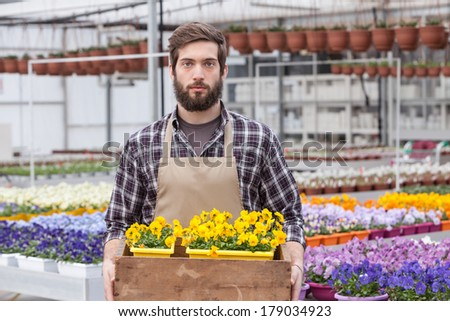 Portrait of young adult male worker carrying small potted flower in tray at greenhouse - stock photo
