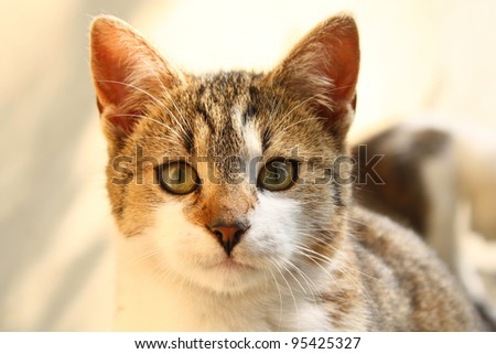 Portrait of young cat - stock photo