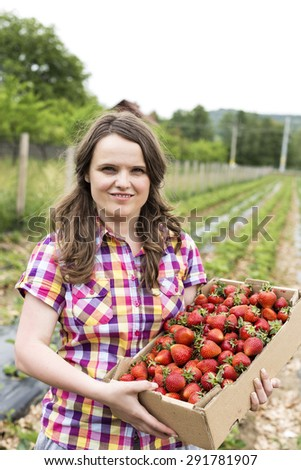Portrait of young woman in strawberry field holding a cardboard box full with fresh red strawberries - stock photo