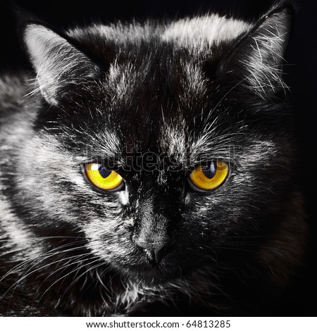 portrait serious  cat with orange eye - stock photo