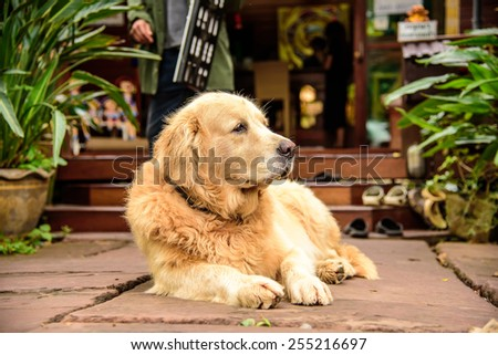 Portrait young dog - stock photo