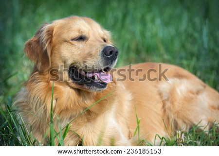 Portrait young dog playing in the meadow - stock photo