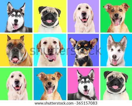 Portraits of cute dogs on colorful backgrounds - stock photo