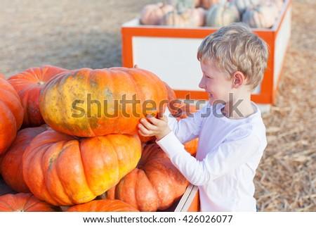 positive cheerful boy enjoying pumpkin patch at fall being playful choosing pumpkin - stock photo