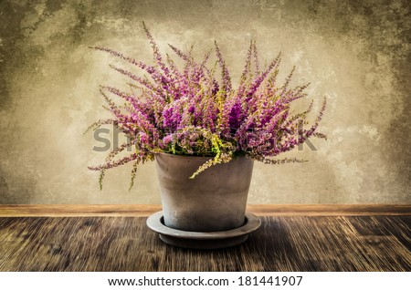 Post process painting of heather flower in pot with textured wall background, vintage style - stock photo
