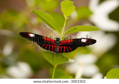 Postamn Butterfly on plant - stock photo
