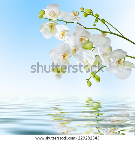 Postcard. Beautiful white orchid flowers reflected in water on blue background - stock photo