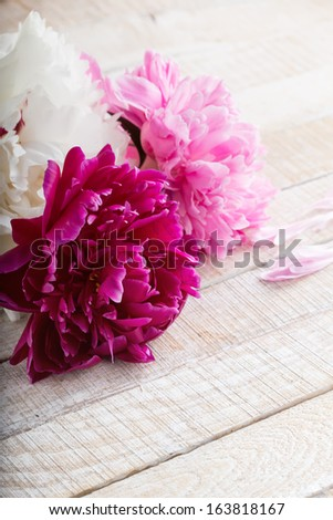 Postcard with fresh flowers peony and place for your text. - stock photo