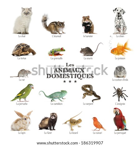 poster of pets in french - stock photo