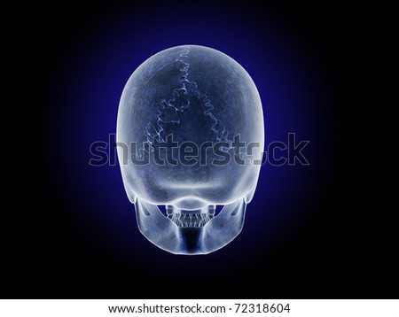 Posterior View of Skull - stock photo