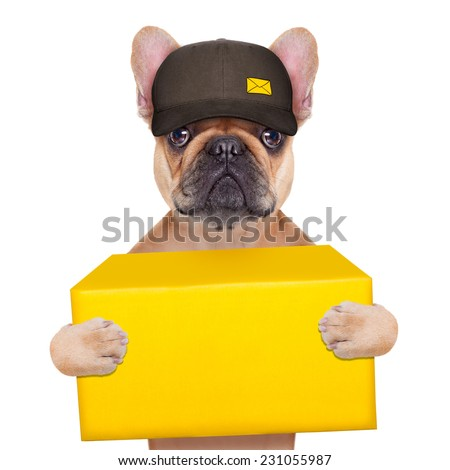 postman  french bulldog holding a yellow shipping box , isolated on white background - stock photo