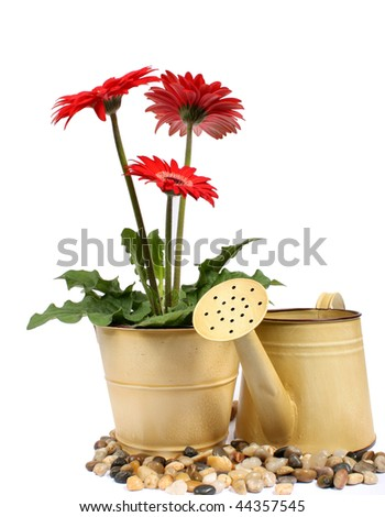 Pot plant and watering can - stock photo