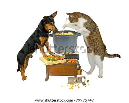 Pot Watcher, dog and cat are cooking - stock photo