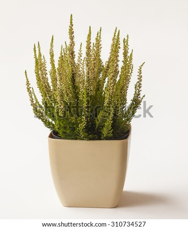Pot with heather - stock photo