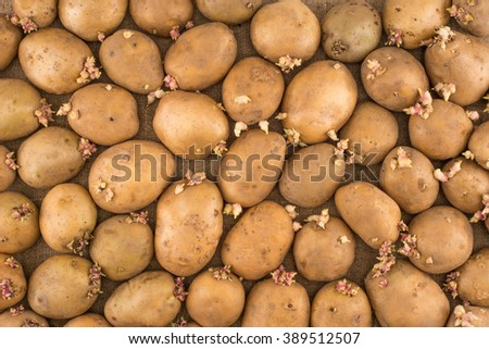 potato on burlap sack background. Natural canvas texture. Organic food. Backdrop for design. - stock photo