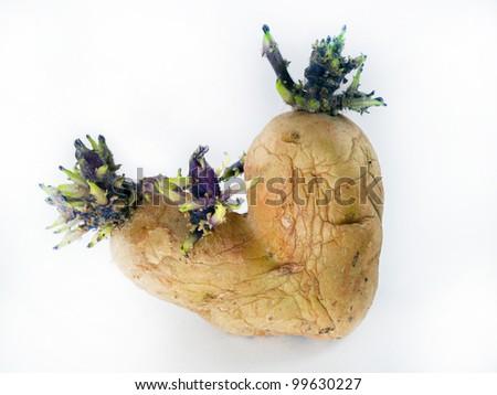 potato sprouts on white background - stock photo