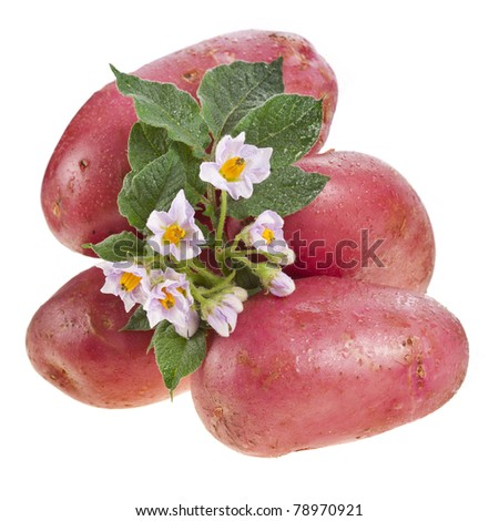 potato with leaves and flowers - stock photo