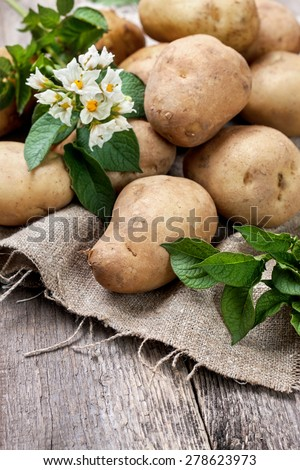 potato with leaves and flowers on a wooden background in rustic style. harvest potatoes - stock photo
