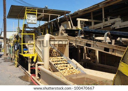 Potatoes are moved along a conveyor belt where they are washed at a Central California packing plant - stock photo