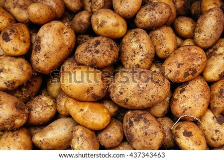 Potatoes raw vegetables food for pattern, texture or background. Health food concept. - stock photo