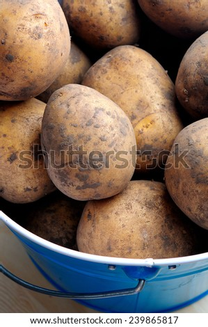 potatoes raw vegetables food in market for pattern texture and background - stock photo