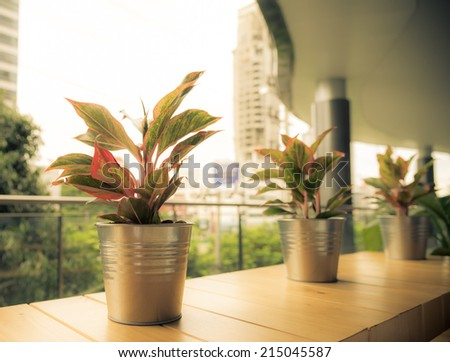 Pots of  Photos plants  arange in the roll for decoration in the empty building vintage retro - stock photo