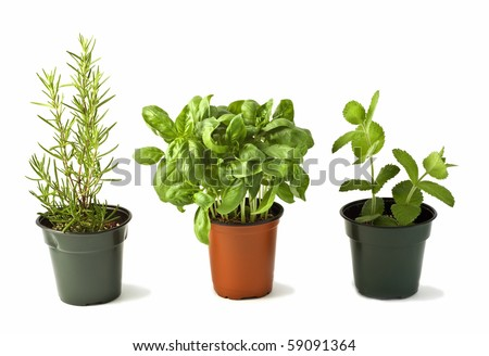 Pots of rosemary, basil and mint isolated on white background in horizontal format - stock photo