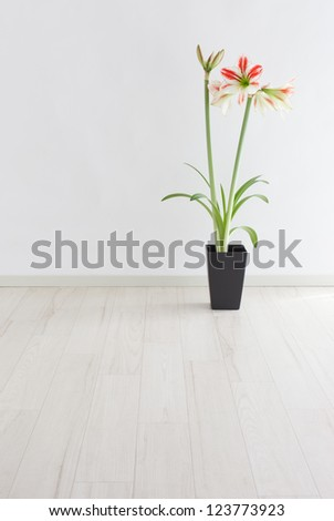 Potted amaryllis in a room - stock photo