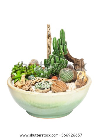 Potted Cactus and Succulent Garden Isolated on White       - stock photo