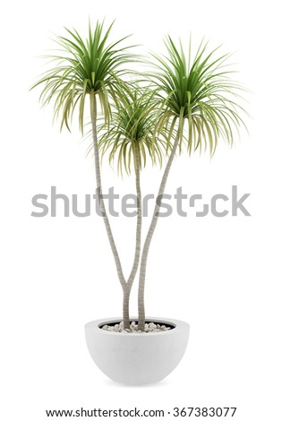 potted palm tree isolated on white background - stock photo