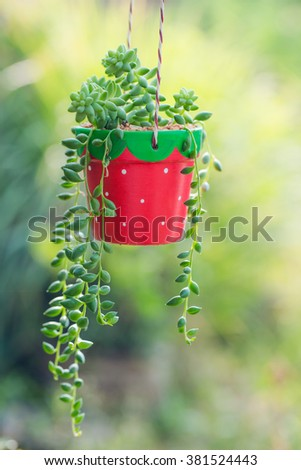 Potted Plant. Beautiful green House Plant in ceramic pot. Image has shallow depth of field. - stock photo