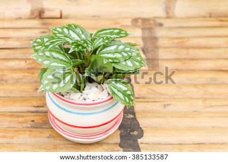 Potted plant in a pot on Bamboo stretcher - stock photo