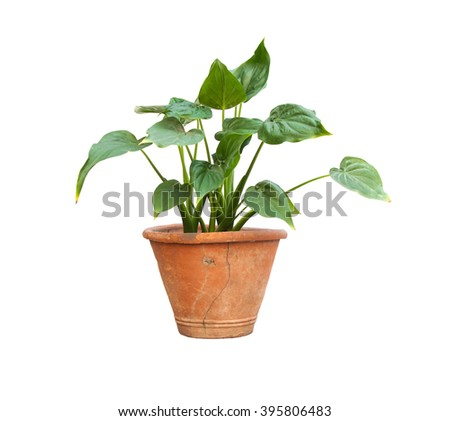 Potted plants isolated background, Selective Focus. - stock photo