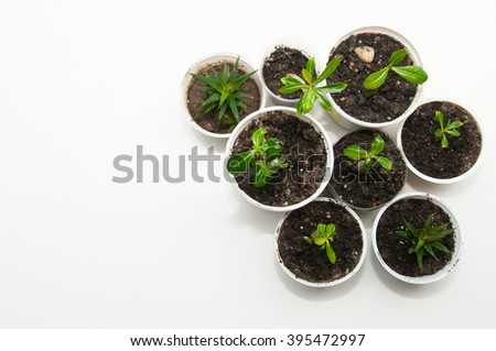 Potted seedlings growing in little pots on gray background with copy space - stock photo