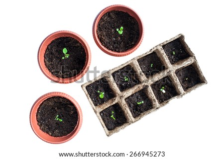 Potted seedlings growing in pots isolated on white background - stock photo