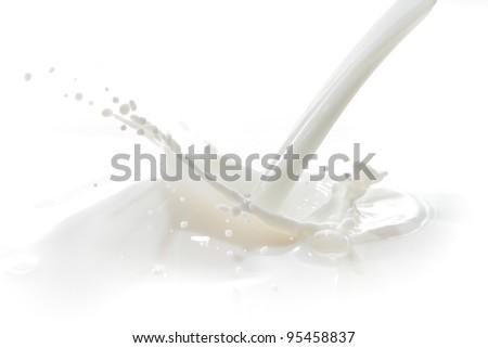 pouring milk splash isolated on white background - stock photo