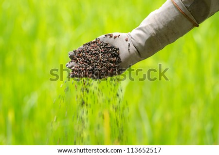 Pouring of chemical fertilizer on farmer hand over green background - stock photo