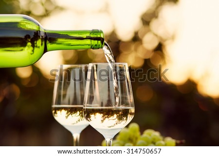 Pouring white wine into glasses in the vineyard, toned - stock photo